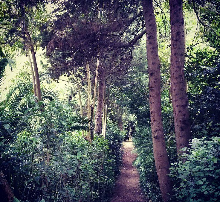 Pasquetta tra i grandi alberi al Parco dei Ligustri